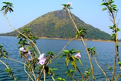 A solitary hill by a lake and a few wild flowers.. (Lopamudra !) Tags: india lake flower nature beauty flora hill scenary westbengal naturesfinest lopamudra panchet superbmasterpiece diamondclassphotographer flickrdiamond brillianteyejewel