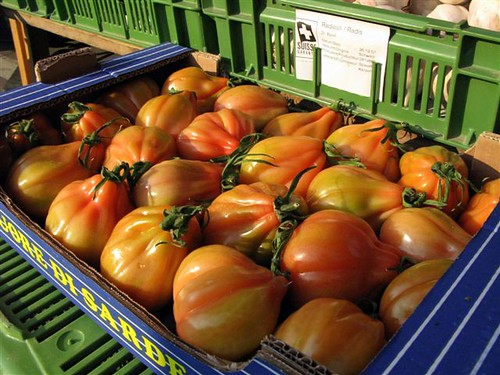 funny looking heirloom tomatoes