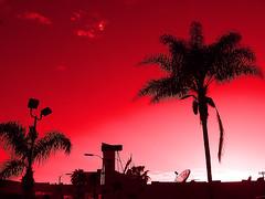 Detecting Pinkish and Reddish (Dom Guillochon) Tags: california trees sunset usa beach clouds unitedstates sandiego beachlife pb pacificbeach antenna californiawinter californiacoast pinkishsky mywinners pinkalicious redishsky