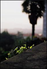 croissance (filtran) Tags: spain zuiko donostia 50mmf14 hondarribia fontarabia om2n fujicolorpro160s fuentarabie