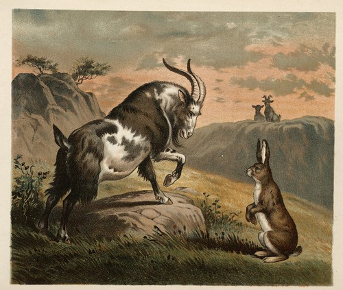 Ballad of the Lost Hare 2-1882