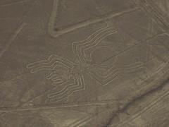 spinne (dibopics) Tags: bird peru lines spider astronaut whale humming cessna nazca kolibri schubkarre quipu dibopics