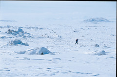 BORBACK01 (Adam Strange) Tags: snow canada cold eskimos nunavut igloo arcticcircle baffinisland inuksuk inuktitut
