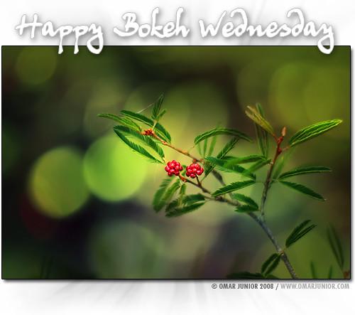 happy bokeh wednesday