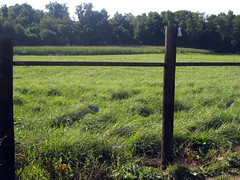 Rested pasture
