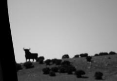 (Daniel Villar-Onrubia) Tags: bull toro osborne manoloprieto