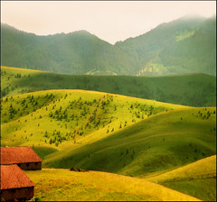 Stables (Katarina 2353) Tags: wood travel trees summer mountain mountains tree green film nature forest landscape photography nikon europe flickr peace image serbia paisaje pasture valley paysage plain priroda stables srbija tjkp zlatibor pejza katarinastefanovic katarina2353