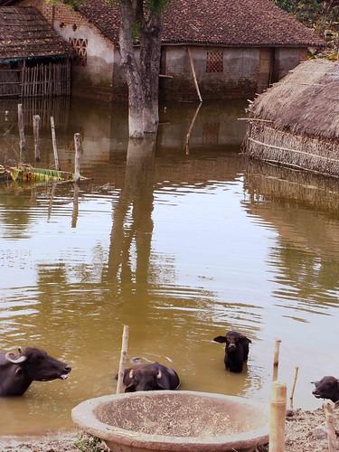 Bihar Diary-I: First Impressions