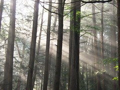 Morning Sun Streaming through the Wood (Harry1125) Tags: desktop wood morning trees summer sky orange mountain mountains green nature beautiful look leaves forest sunrise photography one 1 woods day mt view unitedstates state kodak pennsylvania good united great north july east mount vista poconos daytime keystone states easy 2008 northeast share penna easyshare desktopbackground pocono z1285
