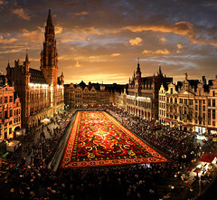 Carpet flower, Great Market, Brussels, Belgium - Batistini Gaston