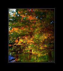 Fte automnal...!!! (Denis Collette...!!!) Tags: trees wild canada color colour reflection tree colors feast automne reflections river photo bravo colours quebec photos couleurs rivire safari reflet arbres qubec rivers walden fte collette arbre reflets photosafari couleur impressionist denis sauvages thoreau feasts sauvage impressionists rivires automnal portneuf wildrivers ftes wildriver automnes impressionistes impressionniste flickrsbest automnale automnales deniscollette pontrouge riviresauvage world100f multimegashot riviressauvages photossafari automnals imagesforthelittleprince visionqualitygroup visionquality100 oracoob oracosm