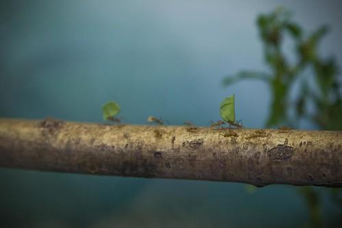 cowboyuk80님이 촬영한 Museum Ants.