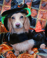 Wet Witch (Doxieone) Tags: bear dog fall halloween hat toy costume teddy witch mosaic dachshund 2008 31 final1 halloweenfall2008set