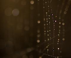 Bokeh Beads (EXPLORED) (Sean Rogers1) Tags: pink brown macro green water up lines contrast garden spider beads drops nikon close bokeh spiders web tube tubes drop line explore bead 100 extension 300 vivitar webs refract d40 explored bokehlicious