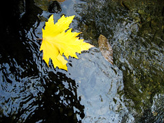 (Alizadeh100) Tags: trip light people black color art nature water yellow canon river photography photo gathering azghad ازغد upcoming:event=1178837