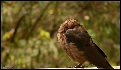 Wierd Crow