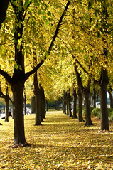 Goldener Oktober (dolorix) Tags: autumn trees searchthebest herbst bume visiongroup overtheexcellence