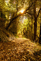 The Woods (Paul O' Connell) Tags: park autumn trees ireland dublin fall nature forest woodland woods october europe seasons outdoor path branches eire liffey valley ie leafs thefall dublincity pauloconnell wwwpocphotographycom pocphotography