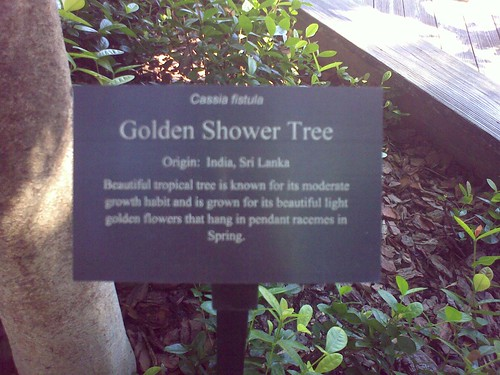 Golden shower tampa