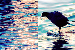 {When it takes one.. (Capture Queen ) Tags: summer lake color bird water swiss