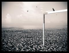 Pomba em Copa (Bruno Da Silva) Tags: praia beach rio brasil riodejaneiro janeiro copacabana lindo bruno gol nox pomba trave brunox brunosilvafotbr