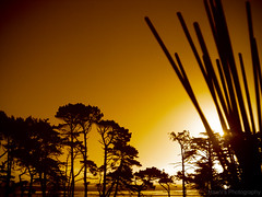 Sticking with the Sunset (~Haani~) Tags: trees light sunset sea newzealand sky sun nature sepia sticks horizon auckland sillhoutte blueribbonwinner haani abigfave anawesomeshot aplusphoto goldstaraward