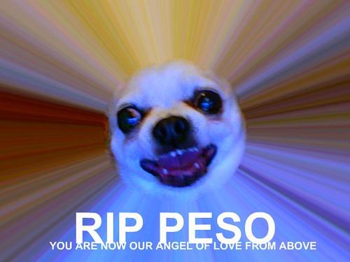 Warp Speed Peso: The Angel of Love