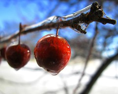 An Icy Branch of Apples (Don3rdSE) Tags: blue winter red sky sun storm cold color macro ice apple closeup fruit december dof bokeh great iowa apples breathtaking crabapple desmoinesia abigfave aplusphoto platinumheartaward dazzlingshots canong9 goldstaraward breathtakinggoldaward don3rdse niceshotmosaic9