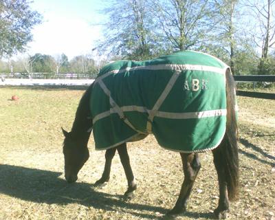 Abrcrombie horse Blanket