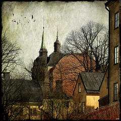 Rooftops (Milla's Place) Tags: trees texture birds photoshop buildings rooftops sweden stockholm sdermalm roofs textured memoriesbook skeletalmess magicunicornverybest selectbestfavorites selectbestexcellence sbfmasterpiece