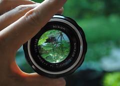 Nikon F Lens (AtlPoster) Tags: camera glass lens nikon focus dof f14 refraction popular greatphotographers photoporn d3000 flickraward flickraward5 flickrawardgallery mcobj