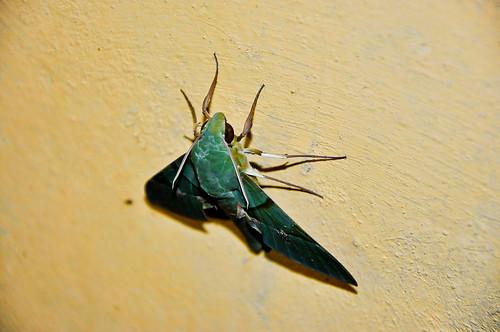Mariposa verde (04)