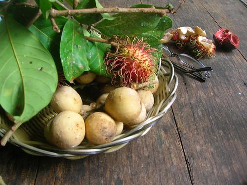 Lychee and Longan Fruit by Danalynn C