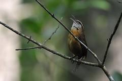 _WLK1780 (KaliNow) Tags: bird nature birds animal animals przyroda ptaki corkscrewswampsanctuary