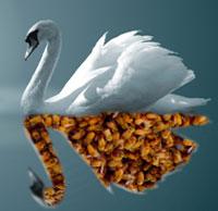 Swanofbees