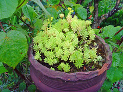 Flowers at kodaikanal (anish.kochi) Tags: flowers church wind antony mills augustine anish kodaikanal palakkad varghese velankanni valayar mukkath palarivattom