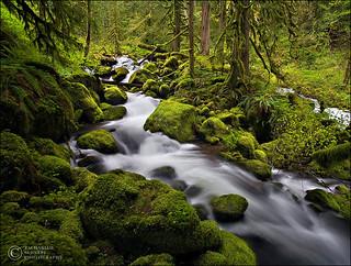 Rainforest Flow