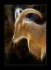Capricornia (klr1818.) Tags: eye animal mouth zoo horns goat sensational mywinners aplusphoto flickrchallengegroup flickrchallengewinner amazingamateur theunforgettablepictures proudshopper theunforgettablephotographer tup2 fractalius theartlair