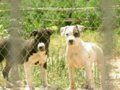 Blanc i negre (Maisse) Tags: naturaleza blancoynegro dogs nature natura campo perros blancinegre whiteandblack gossos digitalcameraclub