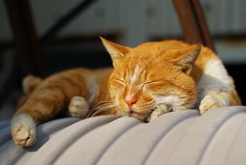 Take a nap #3