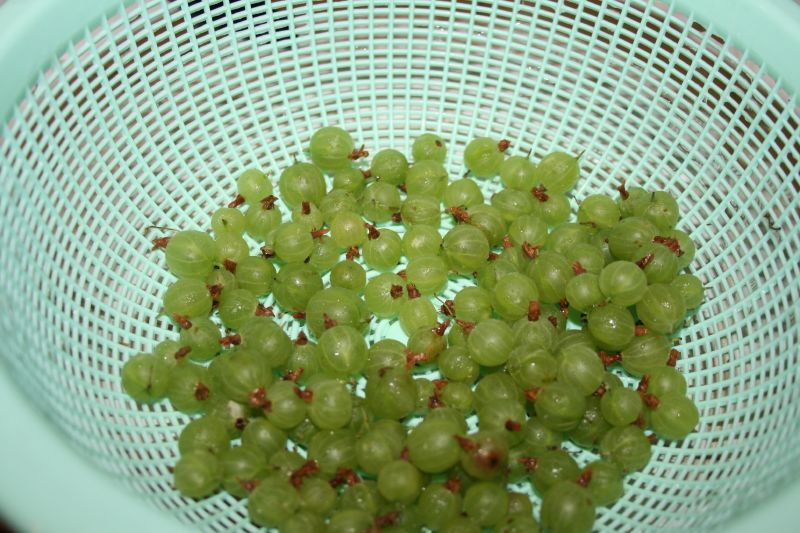 Rinsed Gooseberries