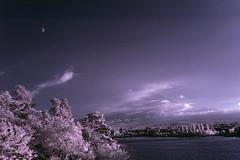 Fuji-san under Moon and Mist (aeschylus18917) Tags: red sky mist mountain lake reflection tree nature japan clouds reflections landscape ir pond nikon scenery fuji d70 nikond70 surreal mountfuji infrared  fujisan d200 infra  mtfuji kawaguchi yamanashi kawaguchiko fujiyama lakekawaguchi   yamanashiken yamanashiprefecture  danielruyle aeschylus18917 danruyle druyle