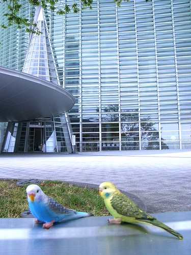 A pair of birds in front of the National Art Center, Tokyo