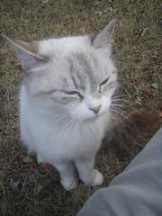 cute evil cat