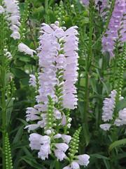 ดอกไม้แสนสวยในสวนย่อมของวัดพงอึนซา ในโซล
