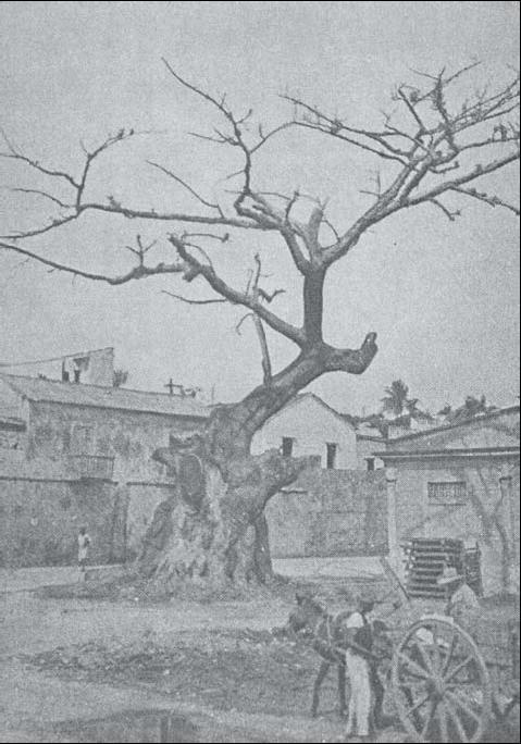 la ceiba de colon siglo 19