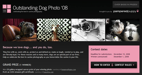 Outstanding Dog Photo Contest