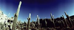 EilonPaz_60640007 (elasio) Tags: panorama southamerica lomo lomography horizon 2007