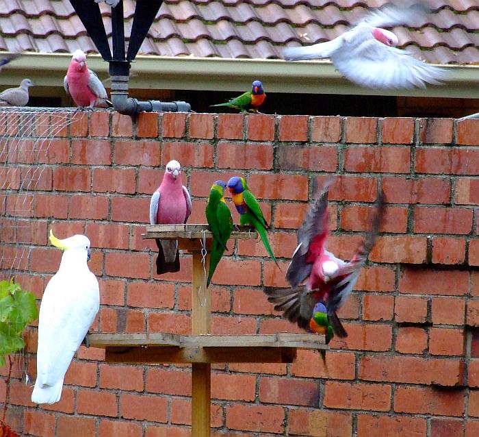 sarah palin attacking bird