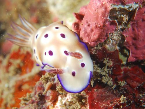 炫彩奪目的海蛞蝓(1)